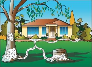 termite treatment sydney on homes